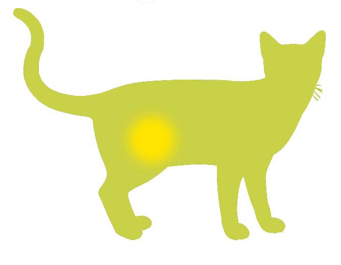 dieta gatto sensibile vie urinarie