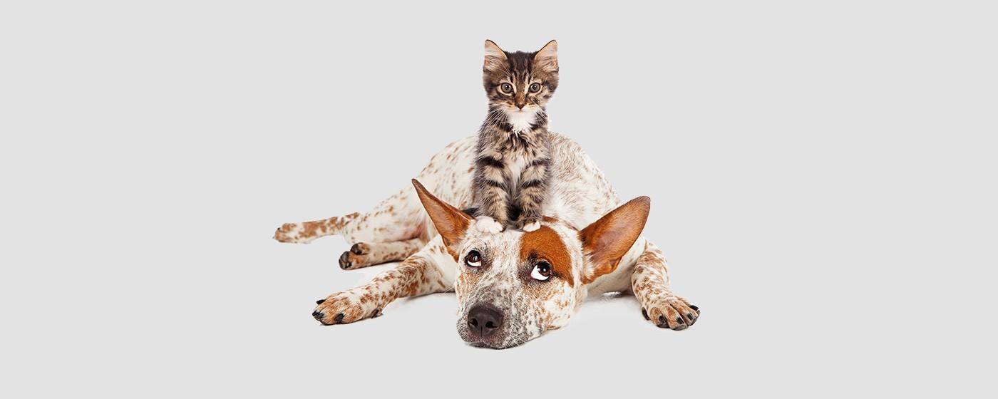 La prima alimentazione su misura per ogni Cane e Gatto